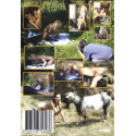 Animal Sex 6 - Zoofilia